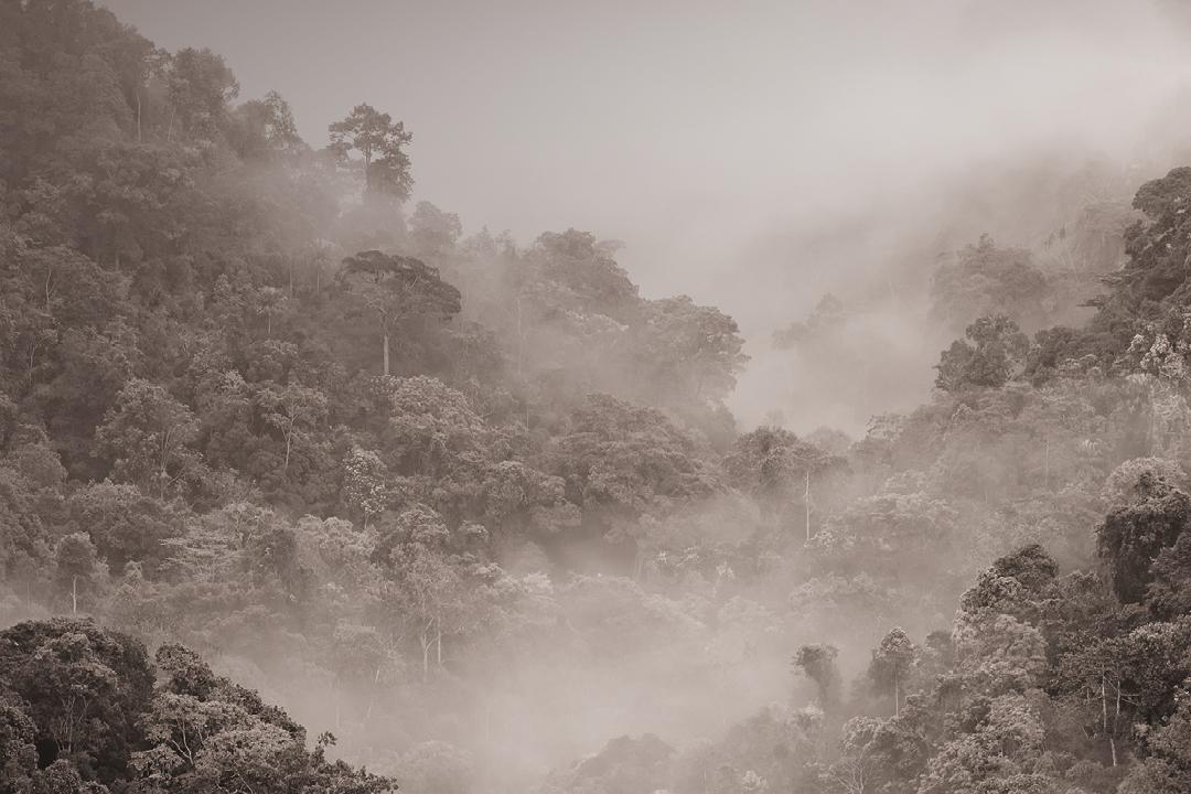Kafa groeit in oerbossen met minimale menselijke tussenkomst